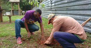 homens plantando muda em cotia