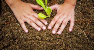 duas mãos afofam a terra em volta de uma muda recém-plantada em Cotia em celebração do Dia Mundial do Meio Ambiente