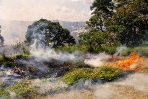 queimada consumindo vegetação em Cotia