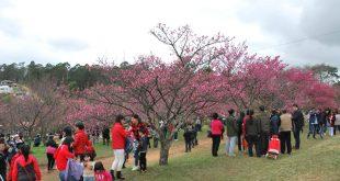 entro Esportivo Kokushikan Daigaku com cerejeiras floridas lotado de visitantes