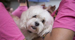 um cãozinho branco no colo da dona na fila de castração