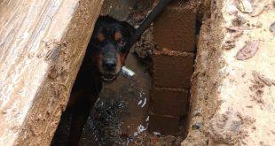 cachorro preso em tubulação