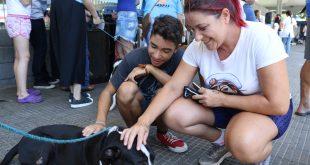 mulher e garoto afagam cão na 1ª feira de adoção de cães e gatos