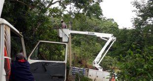 máquinas trabalhando em árvores no maylasky