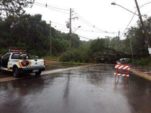 estrada dos pereiras interditada por queda de árvore