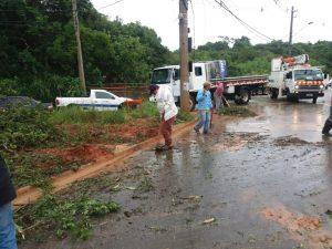 homens trabalhando em remoção de árvore na estrada dos pereiras