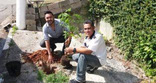 Prefeitura lança o Programa Cotia +Verde para arborizar áreas urbanas